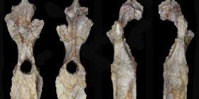 Descubren a la especie de estegosaurio más antigua del mundo