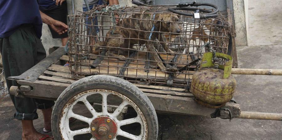 Estrellas piden a Indonesia que vete la venta de carne de perro (horizontal-x3)
