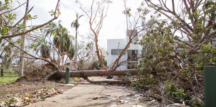 La presentación se enfocará en describir las condiciones en Puerto Rico antes de los huracanes Irma y María y los efectos de las tormentas en los sectores más vulnerables de la población. (horizontal-x3)