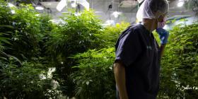 NextGen Pharma busca elevar la industria del cannabis medicinal