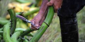 Crecen los agricultores de mercados familiares tras inauguración en Humacao