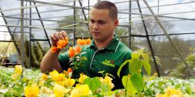 Repunta el cultivo de plantas ornamentales
