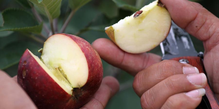 Este alimento contiene fructosa (el azúcar de la fruta) vitaminas E y C, fibra, potasio y magnesio, entre otros. (horizontal-x3)