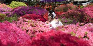 Flores en Nezu