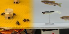 Un experimento logró comunicar a abejas y peces mediante el uso de robots