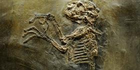 Hallan los restos de un pequeño mono que vivió hace 4.2 millones de años