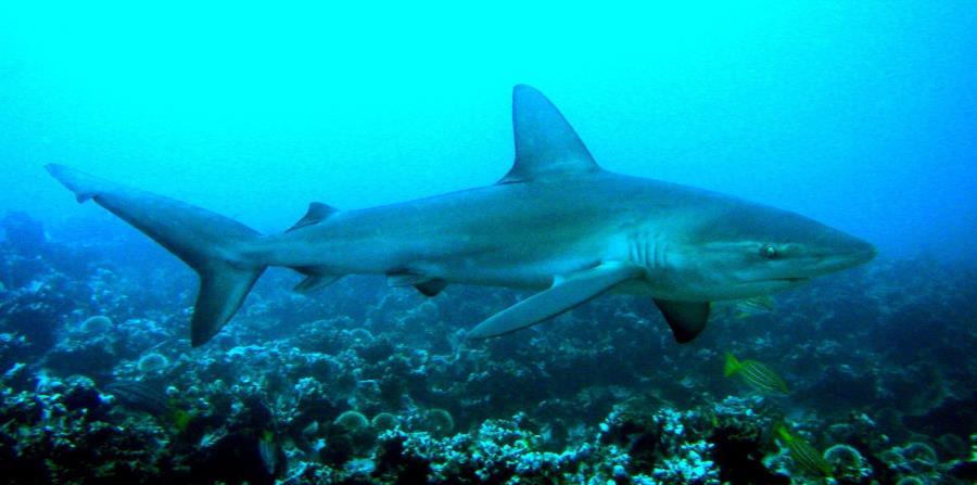 Un joven de 18 años muere al ser atacado por un tiburón en Brasil (horizontal-x3)