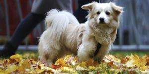 La expresión facial de los perros es una respuesta a la atención humana