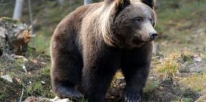Un hombre sobrevive un mes atrapado en la cueva de un oso