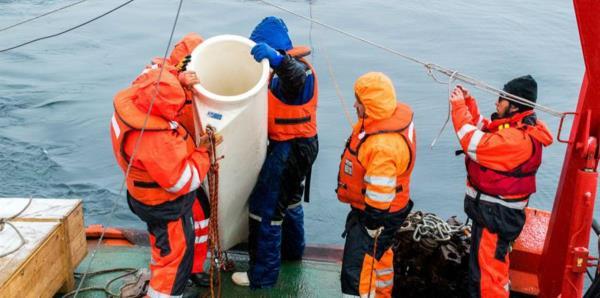 El deshielo glaciar por el cambio climático desaliniza mares de la Antártida