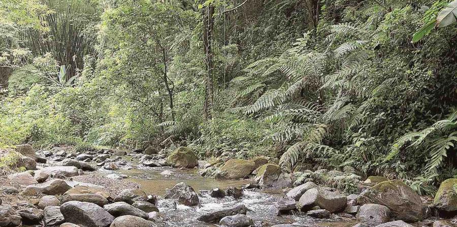 Imagen de un río en el cañón San Cristóbal. (GFR Media) (horizontal-x3)