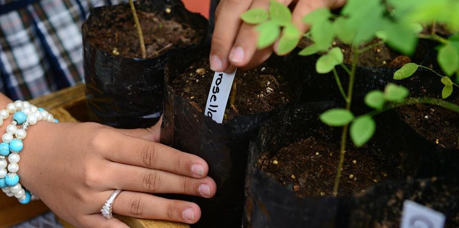 La escuela Agroecológica Laura Mercado de San Germán es titular de aproximadamente 32 cuerdas de terreno. (horizontal-x3)