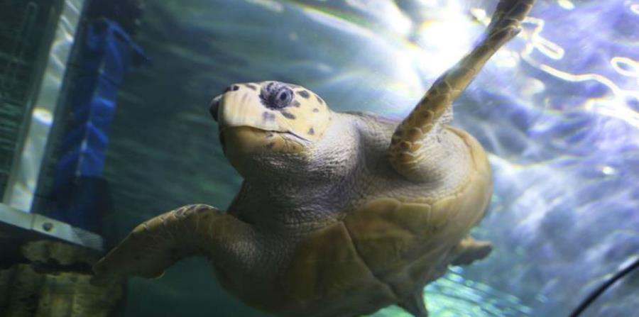 Día Mundial de la Tortuga (horizontal-x3)