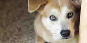 Dejar la mascota sin refugio durante el paso de un huracán podría ser delito en Florida
