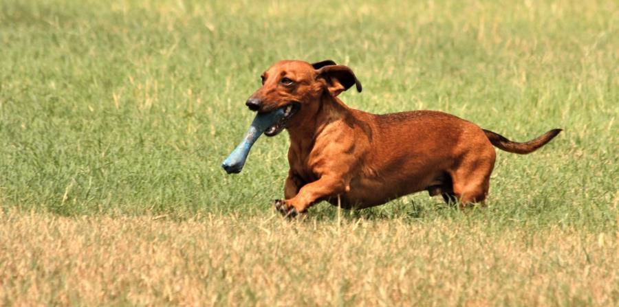 Los perros pesaban menos de 39 libras y pertenecían a un vecino de la víctima. (horizontal-x3)