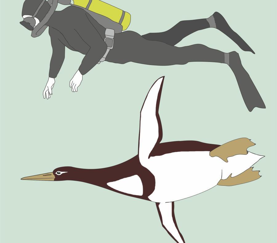 Pingüinos de la prehistoria fueron del tamaño de un hombre