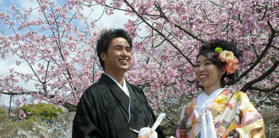 Recién casados posan con un cerezo en flor en Kioto, Japón. (EFE/EPA/EVERETT KENNEDY BROWN)