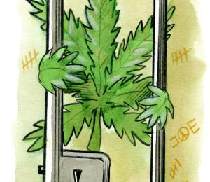 Los traspiés dela marihuana