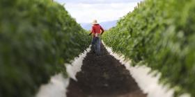 Sector agrícola teme que crisis gubernamental retrase fondos de recuperación