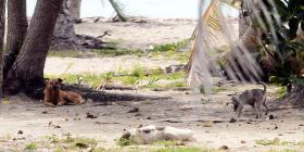 Claman acción urgente hacia animales realengos
