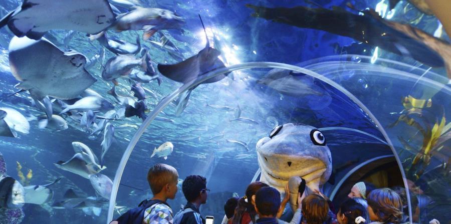 El AquaDom alberga unos 2,600 peces de 56 especies. (Suministrada)