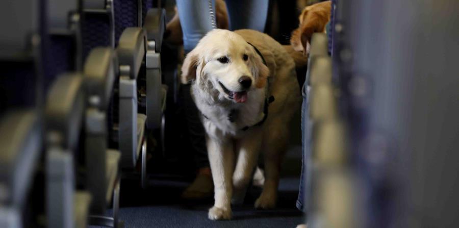Un perro de servicio dentro de un avión en el aeropuerto internacional de Newark. (horizontal-x3)