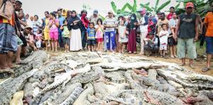 Masacran a cientos de cocodrilos en Indonesia por venganza