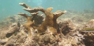 Larga recuperación para los arrecifes tras los huracanes
