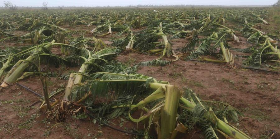 El sector agrícola en Puerto Rico experimentó una pérdida de unos $740 millones. (horizontal-x3)