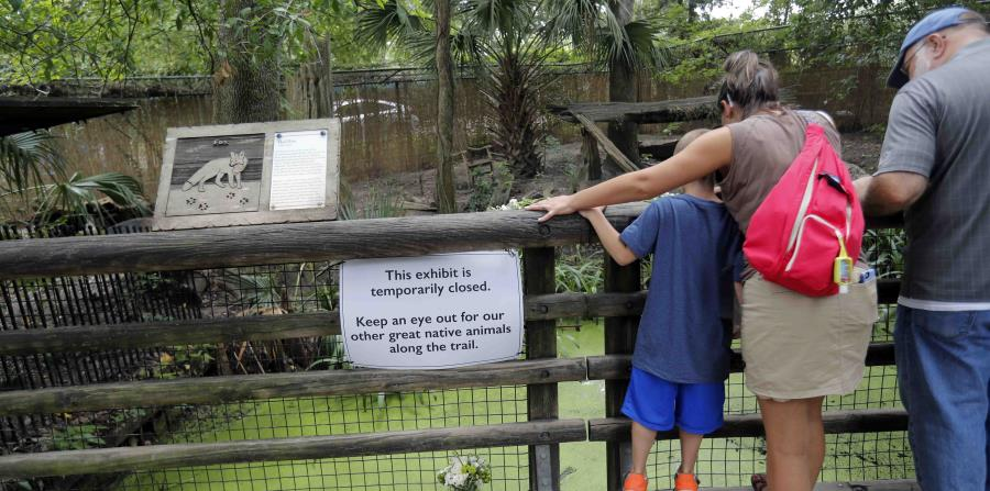 Visitors look at the fox exhibit at the Audubon Zoo in New Orleans, Monday, July 16, 2018. The death of a wounded fox, Rusty, brings to nine the number of animals that have died as the result of the weekend escape of a jaguar from its enclosure at the zoo (horizontal-x3)