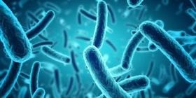 Descubren una bacteria en el océano con un metabolismo que no se conocía