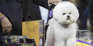 Los perros que deleitaron la competencia de Westminster Kennel Club