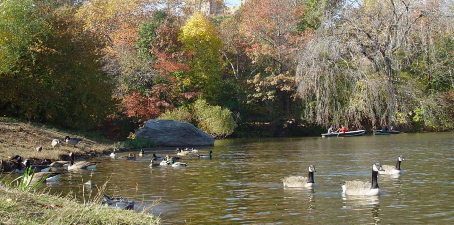 Encuentran un cadáver en embalse de Central Park (horizontal-x3)