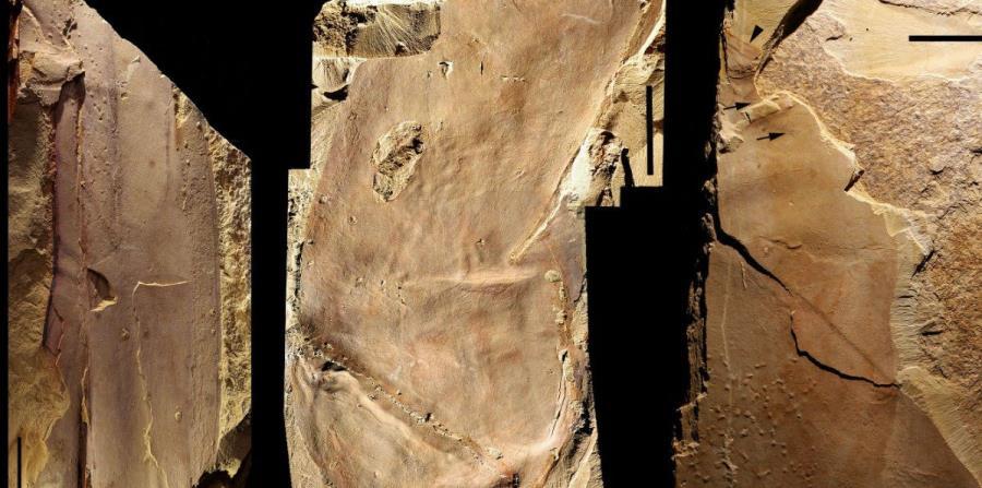 Fósil en China (horizontal-x3)