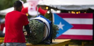 Entusiasmados los boricuas con la compra de árboles de Navidad