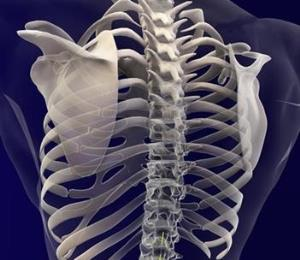 El valor de la médula espinal
