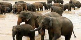 Namibia subastará 1,000 animales para salvarlos de la sequía