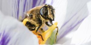 Una patente de la empresa Walmart busca desarrollar abejas robóticas
