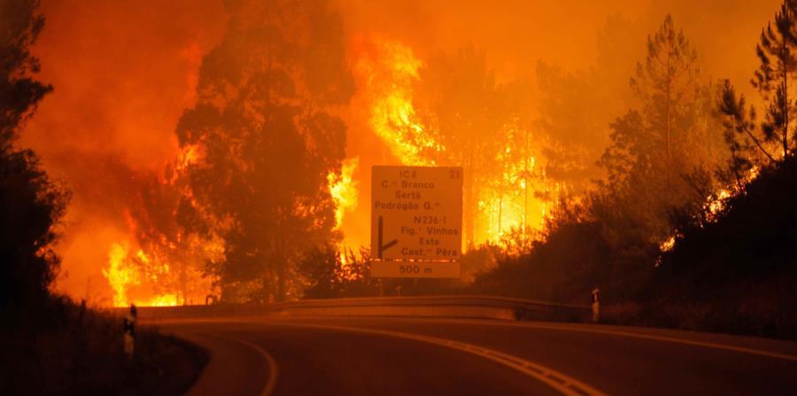 Al menos 19 muertos en un incendio declarado en el centro de Portugal (horizontal-x3)