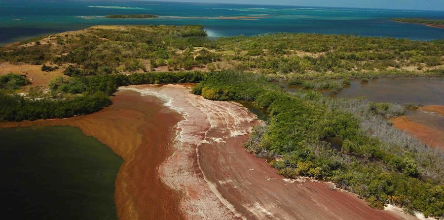 Son dos las especies de sargazo que forman la llamada marea dorada: Sargassum natans y Sargassum fluitans. (horizontal-x3)