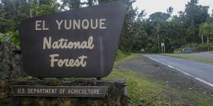 Reabrirán las principales áreas recreativas del Bosque Nacional El Yunque el 8 de julio