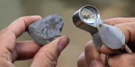 Descubren el fósil de un extraño cangrejo que existió durante la época de los dinosaurios