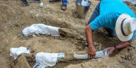 Un niño descubrió el fósil de un cocodrilo prehistórico en la Amazonía brasileña