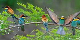 Una de cada cuatro aves desaparece de América del Norte desde 1970