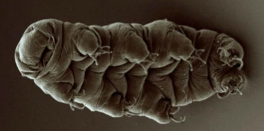 Científicos investigan a estas criaturas con el fin de encontrar tratamientos médicos que detengan el daño a los tejidos (horizontal-x3)