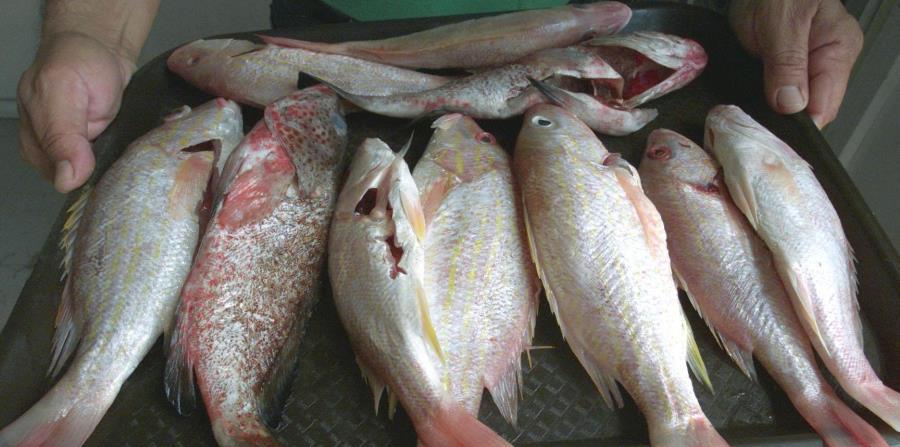 Recomendaciones A La Hora De Consumir Pescado El Nuevo Día