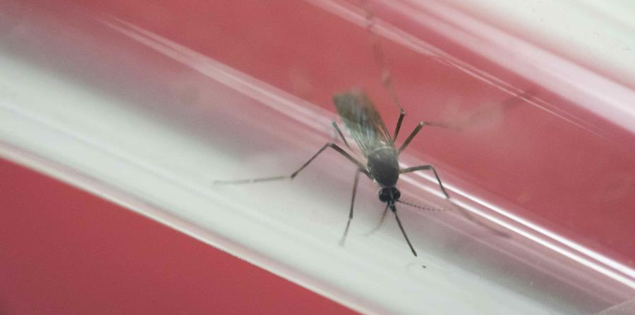 virus del zika (horizontal-x3)