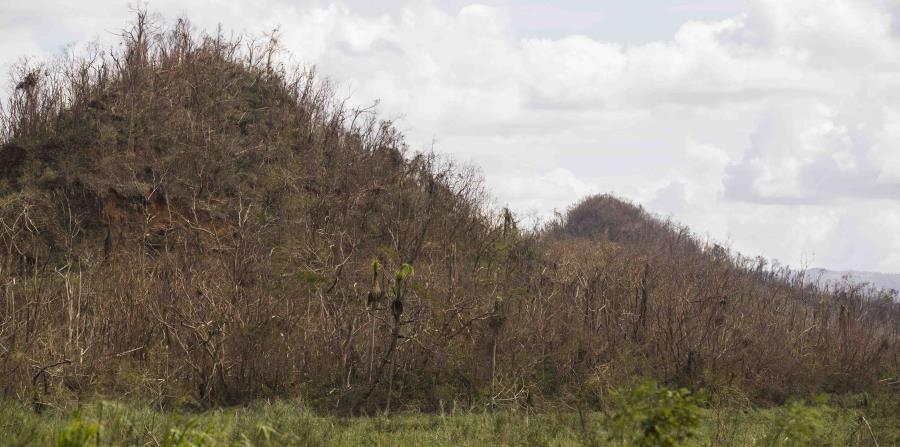 Así quedó un mogote en Toa Baja tras el paso del huracán María. (GFR Media) (horizontal-x3)