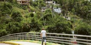 A un año del golpe ciclónico, la montaña ha recobrado su verdor, como se aprecia en esta vista de Comerío. La flora también se recupera en Canóvanas, (foto izq.) al igual que en otros pueblos costeros.