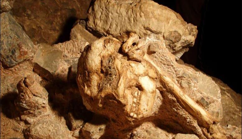 Hallan esqueleto humano de hace 3.6 millones de años (horizontal-x3)